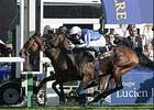 Dylan Thomas Survives Inquiry, Wins Prix de l'Arc de Triomphe