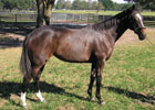 Conformation DVD Feature: Zenyatta