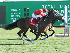 E Z Kitty wins the 2013 Sun City Handicap.