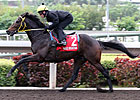 Irish Champion Eagle Mountain Retired
