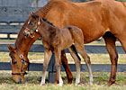 Slideshow: Easter Bunnette and her 2012 Filly