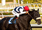 Zenyatta&#39;s Sister Eblouissante Wins Debut