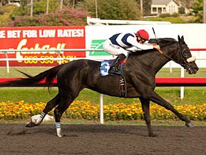 Eblouissante Maiden Win November 16, 2012.
