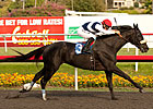 Eblouissante Entered Jan. 17 at Santa Anita