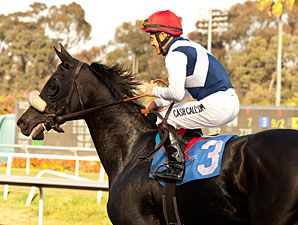 Eblouissante Scraped Up in Shuvee Defeat
