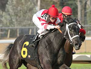 Eight Belles Narrow Oaks Future Favorite