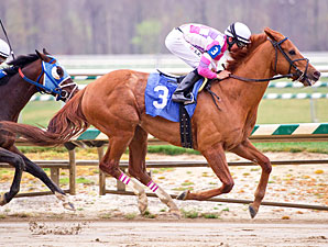 Big Fields Dominate Maryland Million Races