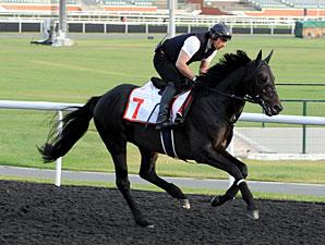 Eishin Flash - Dubai 2012