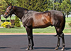Empire Maker Coming Home to Kentucky