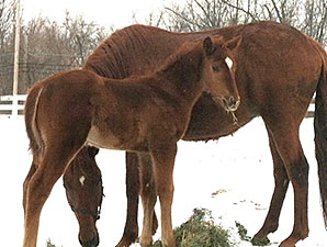 Encaustic Sires First Three Foals