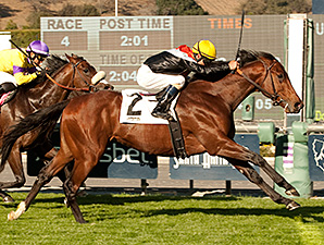 Cal Derby Pits Enterprising, Exit Stage Left