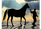 Equine Lending&#39;s Stormy Climate