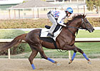 Japan's Espoir City Loosens Up at Churchill