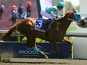 Essence Hit Man wins the 2010 Achievement Stakes.