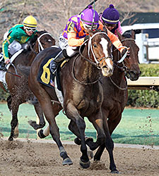 Euphrosyne Elevated to Honeybee Victory