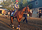 Breeders' Cup 2014: Dank Clears Quarantine