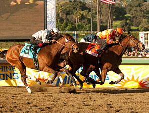 Rejuvenated Evening Jewel Leads Buena Vista