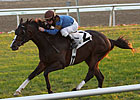 Gantry Favored in Jaipur, His Stakes Debut