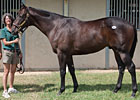Fasig-Tipton Texas Sale Has 170 Yearlings