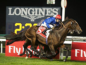 Excellent Result wins the 2014 City of Gold Stakes.