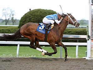 Exhi wins the 2011 Ben Ali.