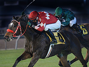 Expect Royalty wins the 2015 San Jacinto Stakes.