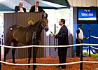 Empire Maker Colt Brings $800,000 at F-T Sale