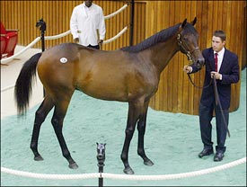 $2.7 Million Unbridled Colt Tops Saratoga Sale; Sharp Gains Again