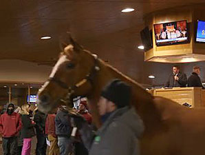 Fasig-Tipton Ky Winter Mixed Sale Day 2 Wrap