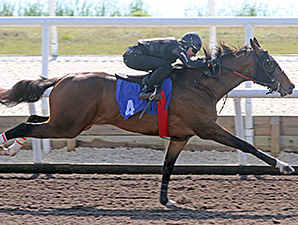 Horses to Watch at Fasig-Tipton Florida Sale