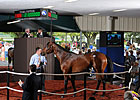 Fasig-Tipton Sale Suffers Setbacks