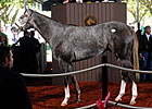 Unbridled's Song Colt Brings $1.1M