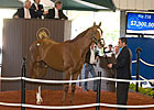 $2.3 Million Colt Has Been Named Brock