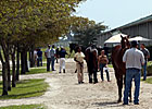 Fasig-Tipton Catalogs 175 for March 2YO Sale