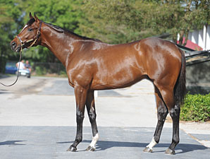 Tapit Colt Brings $1 Million at FT Sale