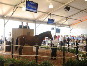 $1.3 Million Big Brown Colt Nears First Start
