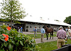 Barns Busy at Fasig-Tipton