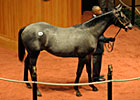 Medaglia d&#39;Oro Colt Brings $450,000 at F-T