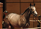 Harlan's Holiday Colt Sells for $225,000