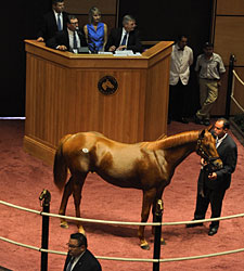 Lemon Drop Kid Colt Sells for $230,000 at FT