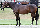 Malibu Moon Colt Fetches $375,000 at F-T