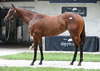 Dehere Filly Tops Early Portion of FT Sale