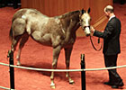 F-T Kentucky October Sale Has 1,007 Yearlings