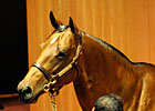 Fasig-Tipton Sale Suffers Sharp Declines
