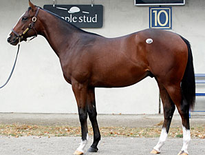 F-T Fall Yearling Sale Opens With Upswings