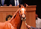 Hollywood Wildcat's Daughter Brings $310,000