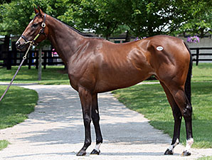 Stakes Winner Temper Mint Patty Tops F-T Sale