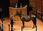 Mare In Foal to Scat Daddy Brings $210,000