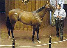 Forestry Colt Leads Way as FTK Kicks Off Yearling Sale Season