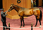 Medaglia d&#39;Oro Filly Sells for $370,000